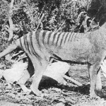 Happy Thylacine Day!
