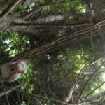Alvin climbs down