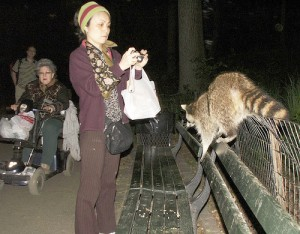 central park raccoon