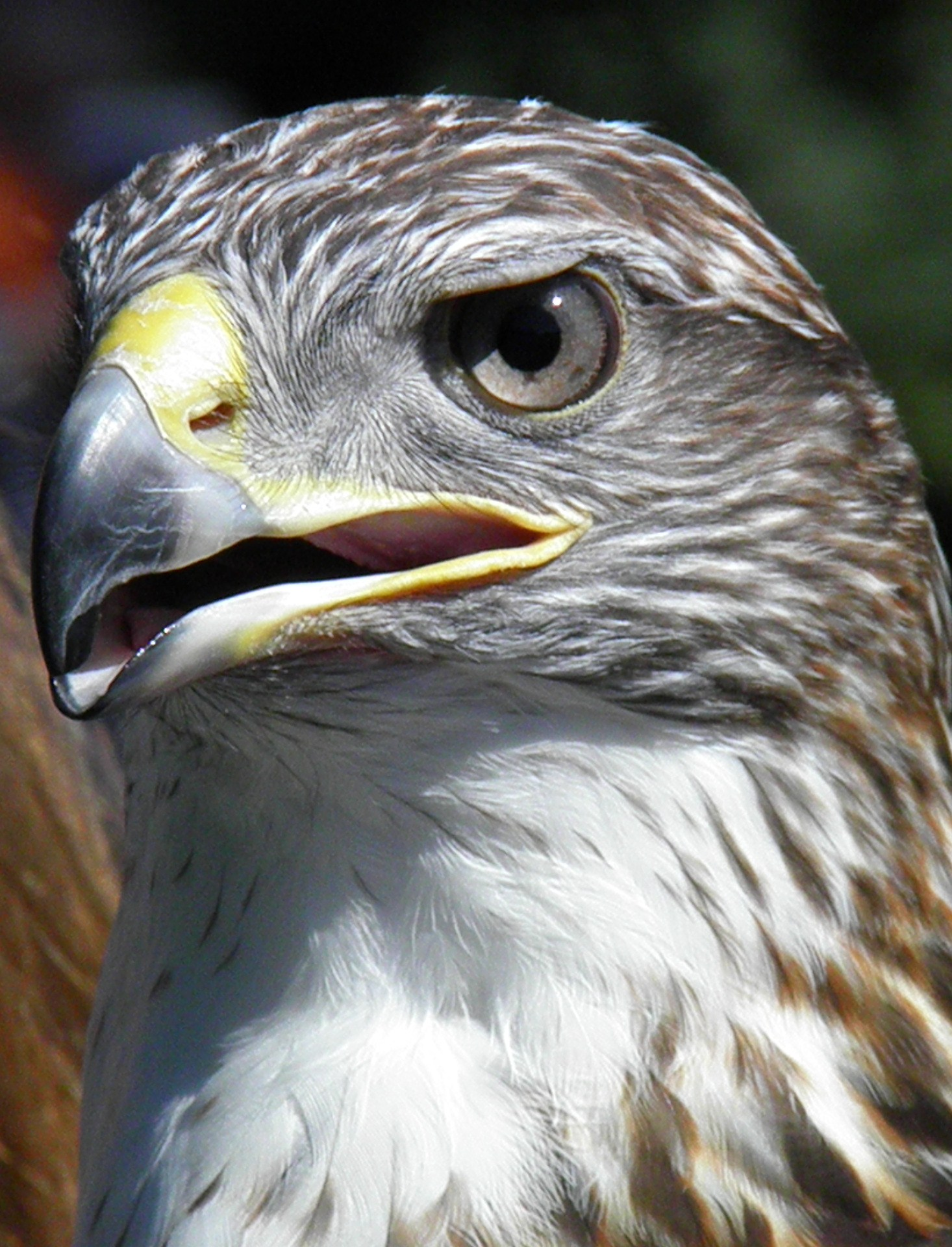 Raptor Fest 2010 Escape To New York City Animaltourism News