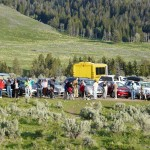 A Huge Crowd Wolf Watching in Yellowstone