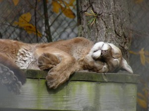 popcorn park zoo sleepy cat