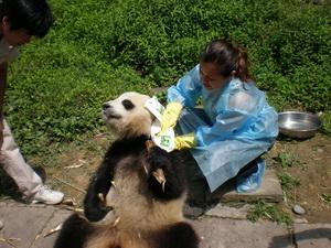 Panda washing