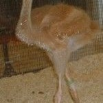 Baby picture of Crane # 412, 2004-2011