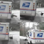 Turkey goes postal on Cape Cod, stills from CapeCodOnline.com video by Eric Williams