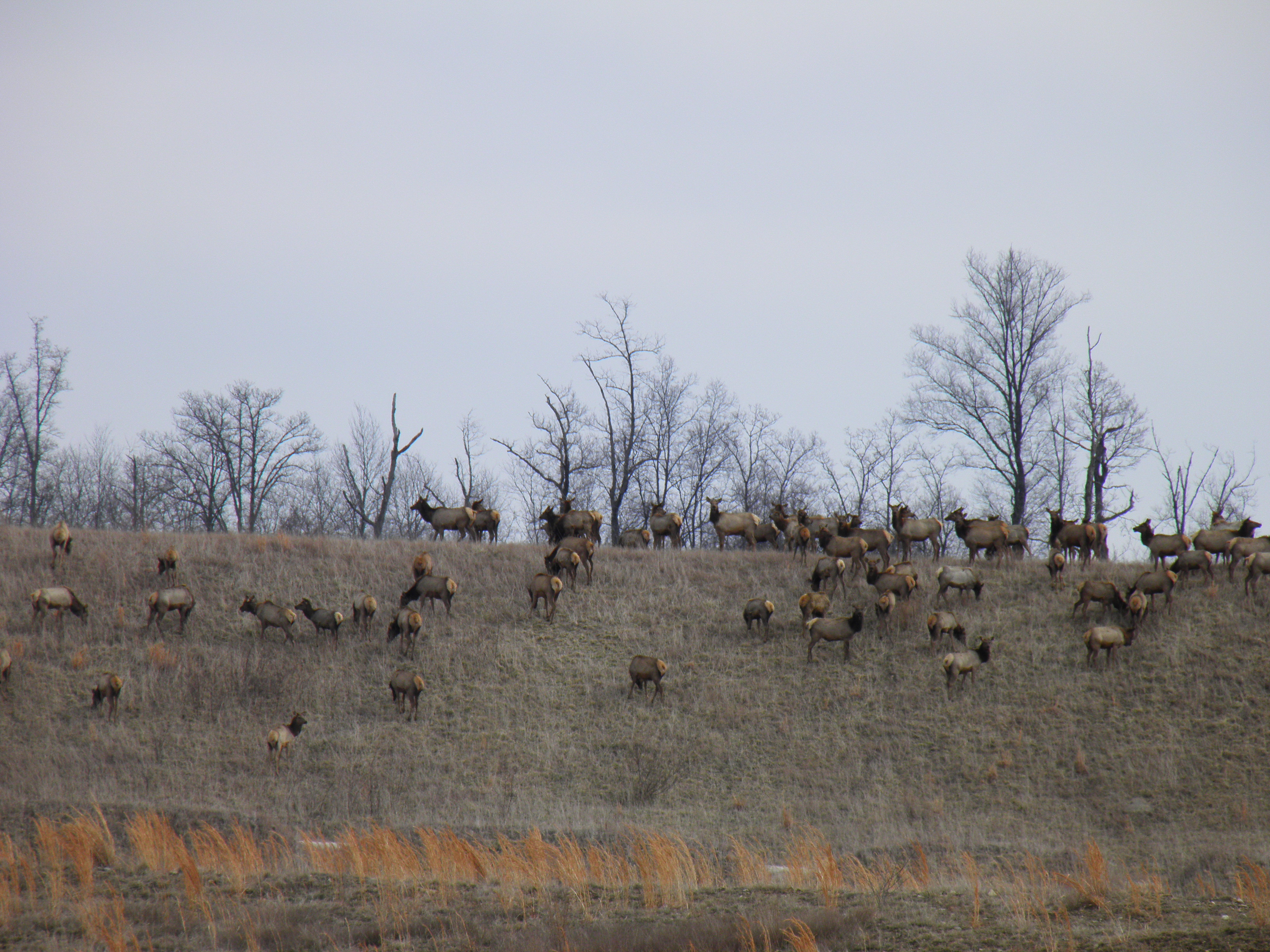 Can You Hunt Near A Nature Conservancy