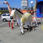 Beagles sniff zebra statue at South of the Border