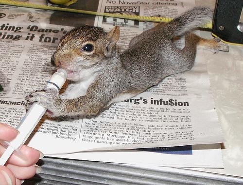 Babysquirreldrinks Animaltourism News