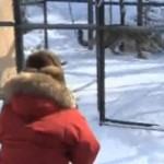 Vladmir Putin watches a captured snow leopard