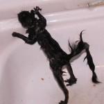 Squirrel with diarrhea needed a bath