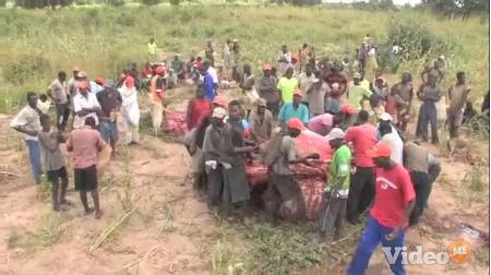 elephant butchering