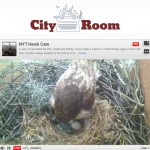 NYT webcam of red-tailed hawk nest at NYU
