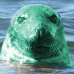 radioactive seal