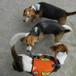 Tompkins Square Beagle Meetup