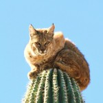 Cactus cat