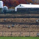 Pheasant stocking farm in NJ