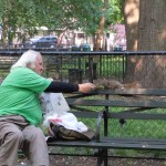 Squirrel feeding in Tompkins