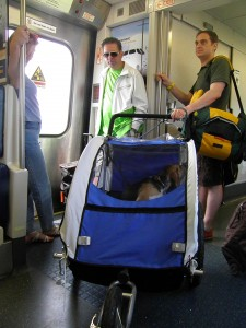 Dogs On Lirr Animaltourism News