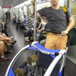 Dogs on NYC Subway