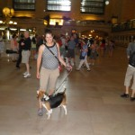 Beagles in Grand Central Terminal