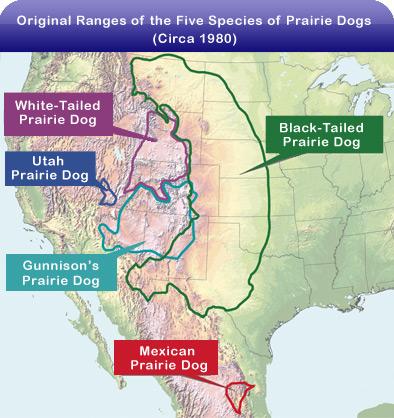 Rarest US Prairie Dog Doesnt Get Endangered Status - Original prairie areas in the us map
