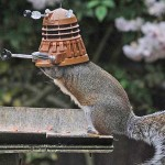 squirrel dalek