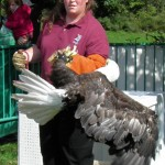 Wrestling a bald eagle