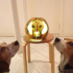 Beagles worship beagle pumpk