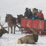 In winter animal tourists get close to elk at the refuge. Lori Iverson / USFWS