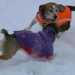 Crazy Beagle Fun Time