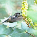 Hummingbird at American Museum of Natural History by By Ed Gaillard Ed