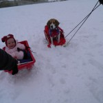 The beagle-baby sled team