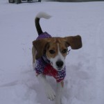 Moxie hops in the snow