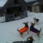 Crazy beagle fun time in Beagletown