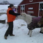 Miniature Horse tries to steal a carrot from my pocket