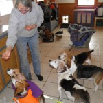 Beagle treat time: Huck, Moxie, Charlie, Snoopy, Woody