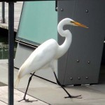 an egret walks into a bar