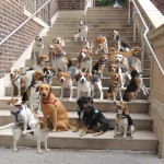 25 beagles pose perfectly at the Prospect Park's Picnic House.