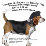 Beagle in a beret