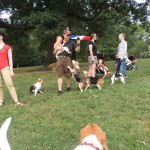 bastille day beagle fun