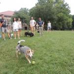 matilda chases a ball