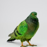 Green painted pigeon
