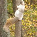 squirrel with white patchy fur