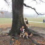 beagle santa 091