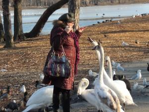 Woman tries to pet the aggressive swans at Prospect Park Lake. Excellent idea.