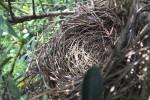 Cardinal Nest 415