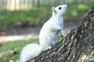 WHITE SQUIRREL TURTLE 037