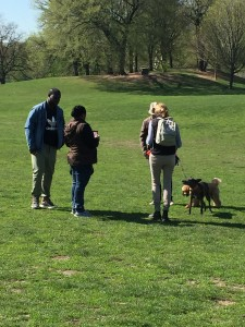 Brave Urban Park Rangers bust a toy poodle mix for violating the hours of off-leash dog-walking in Prospect Park.