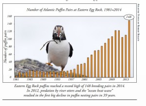 Courtesy of Project Puffin newsletter