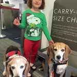 two beagles and an adorable child get ready to board a plane. playing in device to see if they fit in carry-on space.
